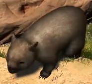 Common-wombat-zootycoon3