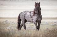 Mustang (V2)