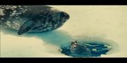 Oceans 2010 Harp Seals
