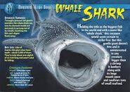 Whale shark weird n