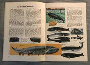 A Golden Exploring Earth Book of Animals (10)