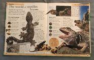 DK First Animal Encyclopedia (39)