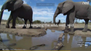 Elephants and Water