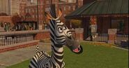 Marty the Zebra