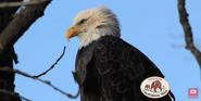 Okland Zoo Eagle