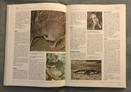 The Kingfisher Illustrated Encyclopedia of Animals (83)