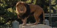 WBAZ Lion