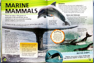Whales Dolphins Porpoises Seals Walruses Sea Otters Marine Otters Polar Bears Manatees Dugongs