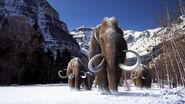 Woollymammoth-1 wide-c92251c02c4611438550b130393048dac3c0d79f