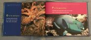 ABC Under the Sea (8)
