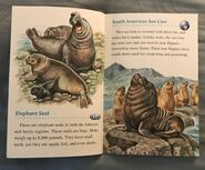 Animals of the Polar Regions (6)