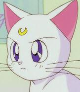 Artemis in Sailor Moon R the Movie-0