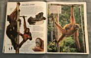 DK Encyclopedia Of Animals (119)