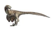 Deinonychus Restoration
