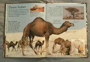 Mammals (Eye Wonder) (14)