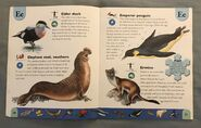 Polar Animals Dictionary (7)