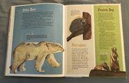 The Dictionary of Ordinary Extraordinary Animals (40)