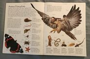 DK Encyclopedia Of Animals (2)