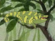 Rileys Adventures Meller's Chameleon