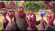 Young turkeys