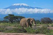 Elephant Nature