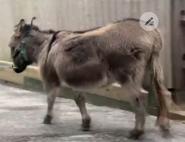 Rodger Williams Park Zoo Donkey