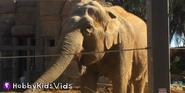 Santa Barbra Zoo Elephant