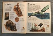 The Kingfisher First Animal Encyclopedia (1)