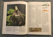 The Kingfisher Illustrated Encyclopedia of Animals (103)