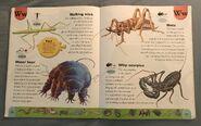 Weird Animals Dictionary (25)