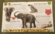 Endangered Animals Dictionary (7)