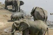 Hippo vs Rhino vs Elephant