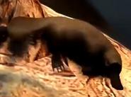 Platypus-zootycoon3