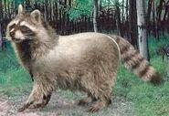 Raccoon switch zoo