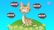 The Cat Goes Meow
