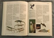 The Kingfisher Illustrated Encyclopedia of Animals (88)