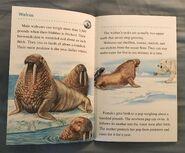 Animals of the Polar Regions (9)