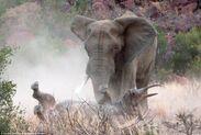 Elefante-contro-rinoceronte-6-591795