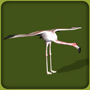 Greater Flamingo (Blue Fang)