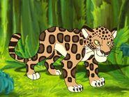Rileys Adventures Central American Jaguar