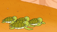 S6E15.154 Baby Sea Turtles Stopping