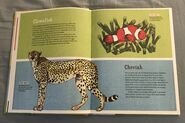The Dictionary of Ordinary Extraordinary Animals (9)