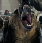 Zoo 2015 Bear
