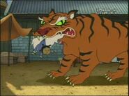 CtCD Tiger