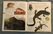 DK Encyclopedia Of Animals (142)