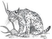 Issoire Lynx