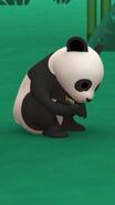 LTWR Giant Panda