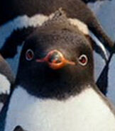 Raul in Happy Feet Two