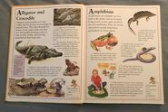 The Kingfisher First Animal Encyclopedia (2)