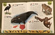 Endangered Animals Dictionary (16)